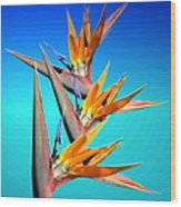 Bird Of Paradise 2013 Wood Print