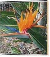 Bird Of Paradise Wood Print