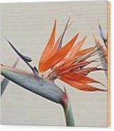 Bird Of Paradise Wood Print by Denice Breaux