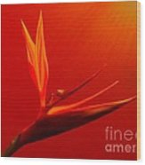 Bird Of Paradise - Flora - Flower Wood Print