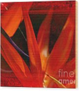 Bird Of Paradise Flower 5 Wood Print