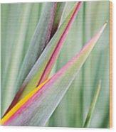 Bird Of Paradise Flower Bud Wood Print