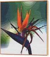 Bird Of Paradise Flower Fragrance Wood Print