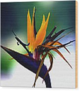 Bird Of Paradise Flower - Square Wood Print