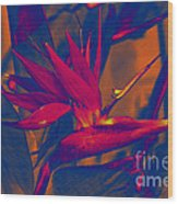 Bird Of Paradise Flower Wood Print