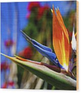 Bird Of Paradise Open For All To See Wood Print