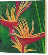 Bird Of Paradise Painting Wood Print