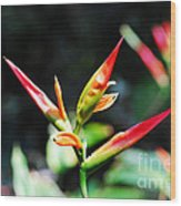 Bird Of Paradise Plant Wood Print
