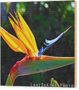 Bird Of Paradise Plant Wood Print
