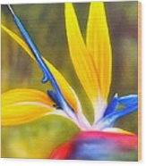 Bird Of Paradise Revisited Wood Print