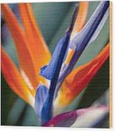 Bird Of Paradise - Strelitzia Reginae  Wood Print