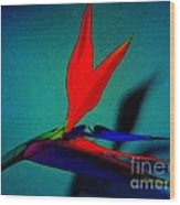 Bird Of Paradise With Blue Background Wood Print