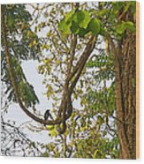 Bird On A Vine In Jungle Forest In Chitwan Np-nepal  Wood Print