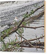 Bird On A Weir Wood Print