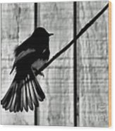 Bird On A Wire I Wood Print