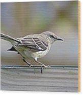 Bird On The Fence Wood Print