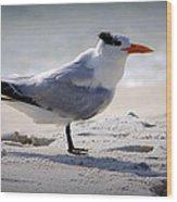 Bird On The Shoreline Wood Print