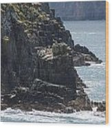 Bird Paradise On Cook Strait Wood Print