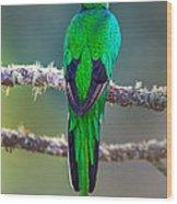 Bird Perching On A Branch, Savegre Wood Print