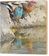Bird Reflection Of Beauty Wood Print