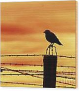 Bird Sitting On Prison Fence Wood Print