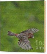 Bird Soaring With Food In Beak Wood Print
