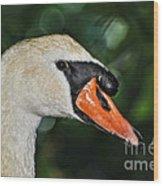 Bird - Swan - Mute Swan Close Up Wood Print