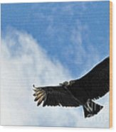 Bird The Black Vulture Wood Print