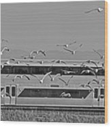 Bird Train Alviso 2 Wood Print