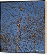 Bird Tree Wood Print