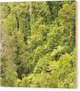 Bird View Of Lush Green Sub-tropical Nz Rainforest Wood Print