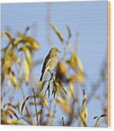 Bird Watcher Wood Print