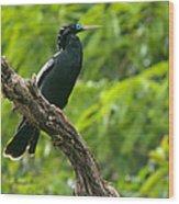 Bird With Blue Eyes Wood Print