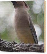 Bird With Bokeh Wood Print