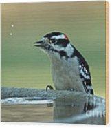 Birdbath Funtime Wood Print