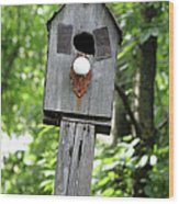 Birdhouse Collection I Wood Print