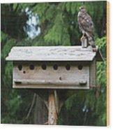 Birdhouse Takeover  Wood Print