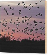 Birds At Sunrise Wood Print