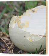 Bird's Breakfast Wood Print