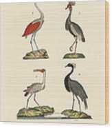 Birds From Hot Countries Wood Print