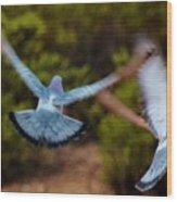 Birds In Flight 030515ab Wood Print