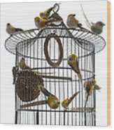 Birds Inside And Outside A Cage Wood Print