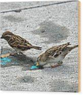 Birds Like Cotton Candy Wood Print