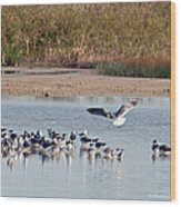 Birds Of Cutler Bay Wetlands 42 Wood Print