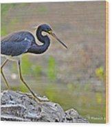Birds Of Cutler Bay Wetlands 47 Wood Print