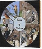 Birds Of Ontario Wood Print