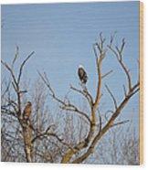 Birds Of Prey II Wood Print