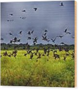 Birds Of The Wetlands V11 Wood Print