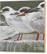 Birds On A Ledge Wood Print