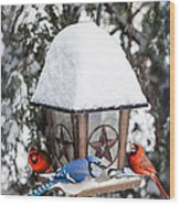 Birds On Bird Feeder In Winter Wood Print